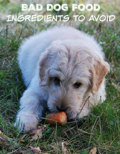 Wondering what makes for bad dog food choices and which ingredients to avoid? Check out our tips for what NOT to look for in a good dog food!