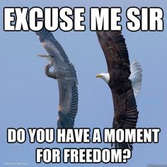 Funniest Bald Eagle Meme Compilation..America!
