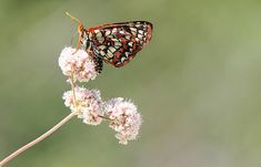 8 Tips for photographing butterflies - http://digital-photography-school.com/8-tips-for-photographing-butterflies#