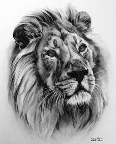 Lion pencil sketch... beautiful