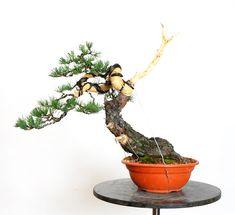 Beautiful Bonsai Garden at Just the Right Moment | Bonsai Bark