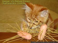 Веселые котоматрицы для настроения (13 фото)