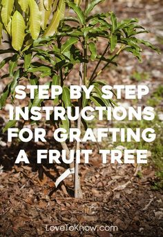 If you plant a peach or other fruit tree seed, the tree that comes up will not p. If you plant a p