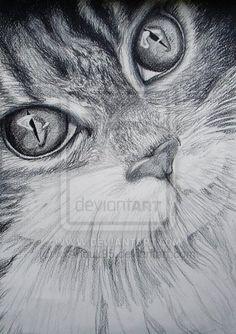 Drawing - Cat. http://xxanouk95.deviantart.com/ https://www.facebook.com/Anouktekent