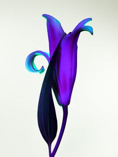 Torkil Gudnason – Hothouse Color #211 at 1stdibs