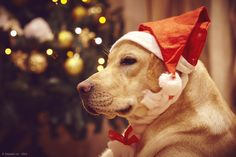 I don't care, it's Christmas by Edoardo Lio on 500px