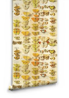 Lepidoptera Wallpaper Roll From The Erstwhile Collection