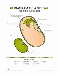 Fifth Grade Life Science Worksheets: Parts of a Seed: Quiz