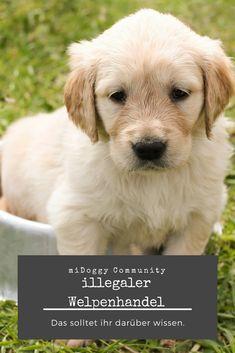 || #Hund || Ideen || #Hunde || Tipps || Tricks || Ideen || Liebe || Welpen || Bilder || #Welpen