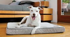 Design Your Own Dog Bed with Amato