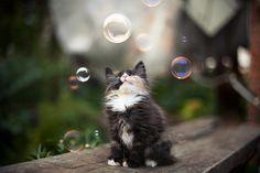 Caturday: Bubble, Bubble, This Looks Like Trubble - Cute Overload
