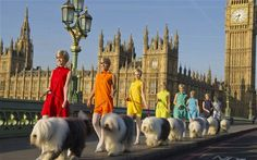 Dulux respond to superbrand status with a colourful PR stunt Picture Story, Photo Story, Westminster Bridge, Paint Brands, Best Ads, Old English Sheepdog, Animal Fashion, Color Of Life, Dog Walking