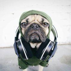 The pug life //