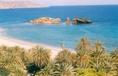 The Palm Forest of Vai in Crete, Greece