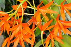 close-up shot of flowers. - Close-up image of flowers.