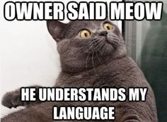 OK, My siblings Meow at cats, wonder if the cats think this! :))