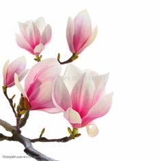 モクレン- 送料無料ビッグmangnolia人工絹の花の結婚式の花の装飾的な花の家の装飾のホテルのリビングルーム