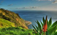 Flora and Fauna at Madeira! Get inspired by the beautiful nature during your business trip.   #Abreu #Travelmediate #Madeira #Portugal