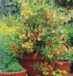 Love these tomatoes!