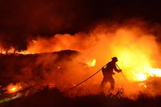 A firefighter controls the western edge of a California brush fire early Friday morning, June 27, 2014.
