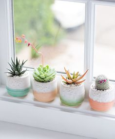 A cactus is a superb means to bring in a all-natural element to your house and workplace. The flowers of several succulents and cactus are clearly, their crowning glory. Cactus can be cute decor ideas for your room. Decoration Cactus, Decoration Plante, Home Decoration, Cacti And Succulents, Planting Succulents, Planting Flowers, Succulent Pots, Succulent Display, Succulent Ideas