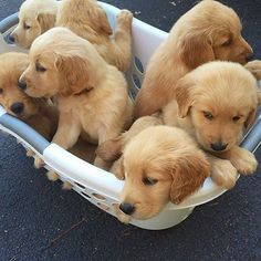 When all of a sudden you have no problem doing the laundry  @beckham_thegolden