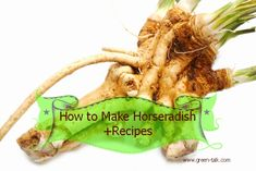 How to Make Horseradish + Recipes.  Why buy store bought?  So much more amazing.