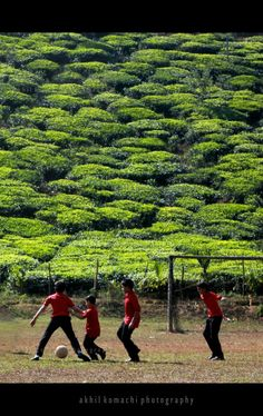 Play with nature.      Chundel, Wayanad, Kerala.