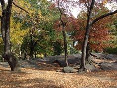 By @KristenKenter. #fallfoliage #centralpark fallfoliag centralpark