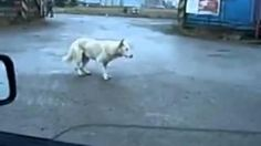 #Dancing #Dog - #funny