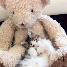 """A cat's best friend is his Teddy Bear."" --""Garfield"" (Created by Jim Davis)"