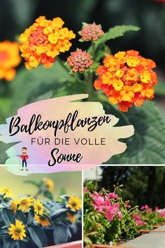 22 Pflanzen für pralle Sonne Plants make the balcony and terrace a blooming oasis. Hydroponics System, Hydroponic Gardening, Back Gardens, Small Gardens, Indoor Garden, Outdoor Gardens, Balcony Plants, Potted Plants, Outdoor Venues