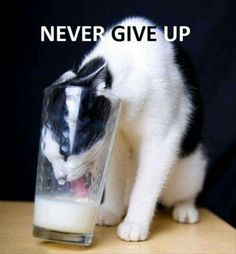 Never give up Amazing!!