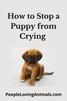 How to stop a puppy from crying at night, how to stop a puppy from crying, how to stop a puppy from crying in the crate, how to stop a puppy from crying when left alone, stop puppies crying, Puppy Training, Dog Training