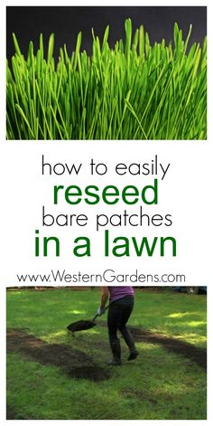 Do you have bare patches in your lawn? Check out these easy steps for reseeding your grass!