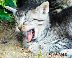 Még álmos vagyok Gardening, Cats, Animals, Gatos, Animales, Animaux, Lawn And Garden, Animal, Cat
