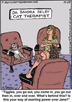 Don't even try to do therapy with a cat...