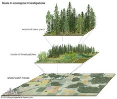 A forest patch nested within a landscape mosaic. Is is important to have ecosystem diversity. animals will use various parts of the landscapes for different needs. One types of ecosystems may not be enough to sustain certain animals.