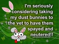 Image result for i'm seriously considering taking my dust bunnies