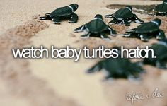 :) Released baby sea turtles into the ocean on our honeymoon. It was amazing!