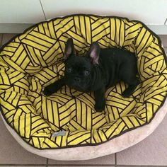 Batpig & Me Tumble It • This was when I didn't need a huge new bed but I...