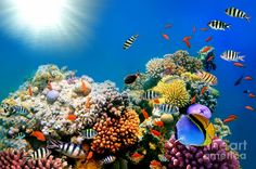 Underwater world fish turtles corals tropical sea ocean coral reef . Coral Wallpaper, Tier Wallpaper, Animal Wallpaper, Wallpaper Desktop, Hd Desktop, Fish Tank Supplies, Underwater Wallpaper, Ocean Turtle, Sea Turtles