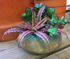 Bromeliad and succulent Cool Plants, Air Plants, Indoor Plants, Container Plants, Container Gardening, Indoor Gardening, Succulent Arrangements, Succulents, Succulent Outdoor