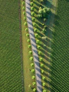 aerial photo of trees and fields creating amazing pattern Aerial Photography, Landscape Photography, Nature Photography, Photography Ideas, Extreme Photography, Friend Photography, Scenic Photography, Night Photography, Landscape Photos