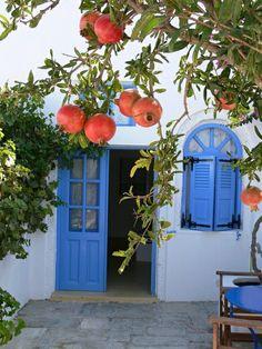 Mediterranean garden pomegranate tree Blue Shutters