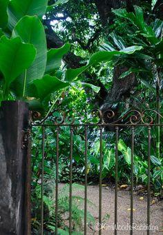 Our Australian Gardens — Tabu: Tropical Paradise in Cairns, Queensland Tropical Garden Design, Tropical Landscaping, Tropical Plants, Backyard Landscaping, Tropical Gardens, Landscaping Ideas, Tropical Beaches, Balinese Garden, Bali Garden