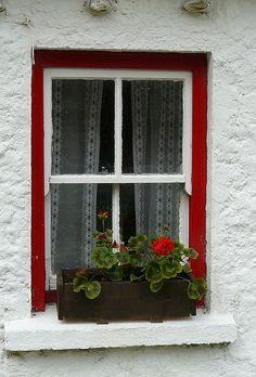 red window geranium