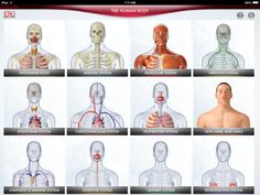 12 body systems human body - Google Search