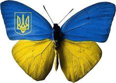 butterfly ukrainian  blue  yellow flag trident
