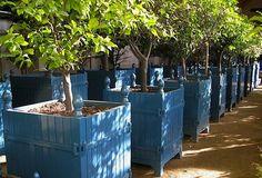 Versailles Planter Boxes, Gardenista